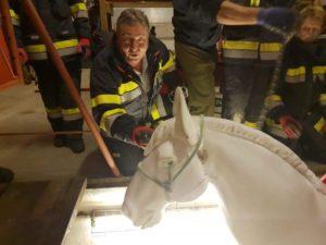 Winterschulung Großtier-Rettung